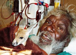 Maurice Gibson is happy to be receiving his dialysis at his home community of Kintore while he minds a baby marlu (kangaroo)