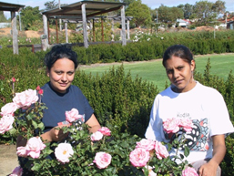 Initial trainees at The Kodja Place, Jaimie McVee and Melissa Riley, among the roses. The idea behind the rose maze was to create a place of restful beauty, unique and lasting. The 2,000 roses that make up the garden are all Australian bred.