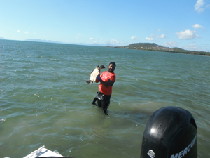 Turtle rescue. Photo: Gudjuda Reference Group Aboriginal Corporation